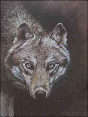 s02-049 Волк