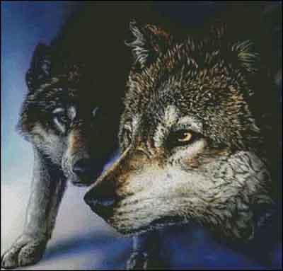 s02-113 Волки