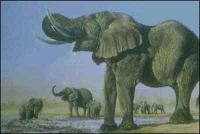 s02-131 Слоны