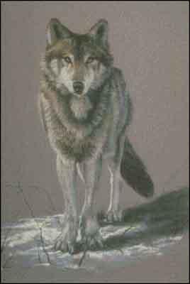 s02-148 Волк