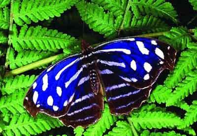 s02ba-006 Тропическая голубая волна