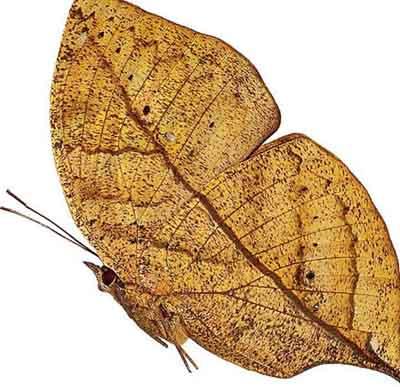 s02ba-023 Осенний лист