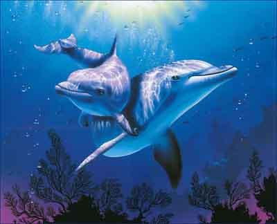 s02de-001 Дельфины