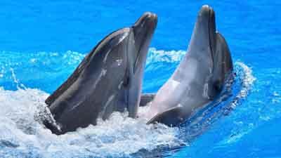 s02de-003 Дельфины