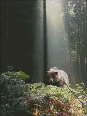 s04-182 Мишка в лесу