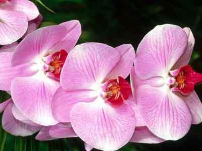 s07or-011 Орхидеи