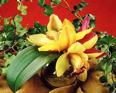 s07or-015 Орхидеи