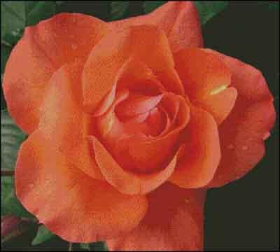 s08-014 Роза