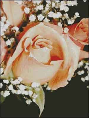 s08-024 Роза