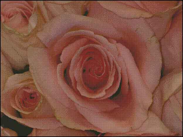 s08-080 Розы