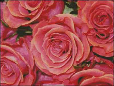s08-081 Розы