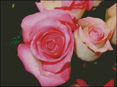 s08-089 Розы