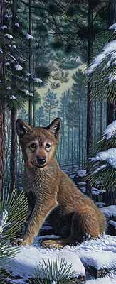 s95-047 Щенок волка